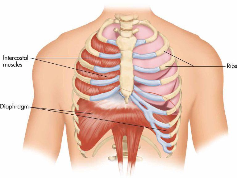 Il Diaframma e la respirazione